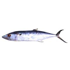 Peixe Serra C/ Cabeça S/ Vísceras
