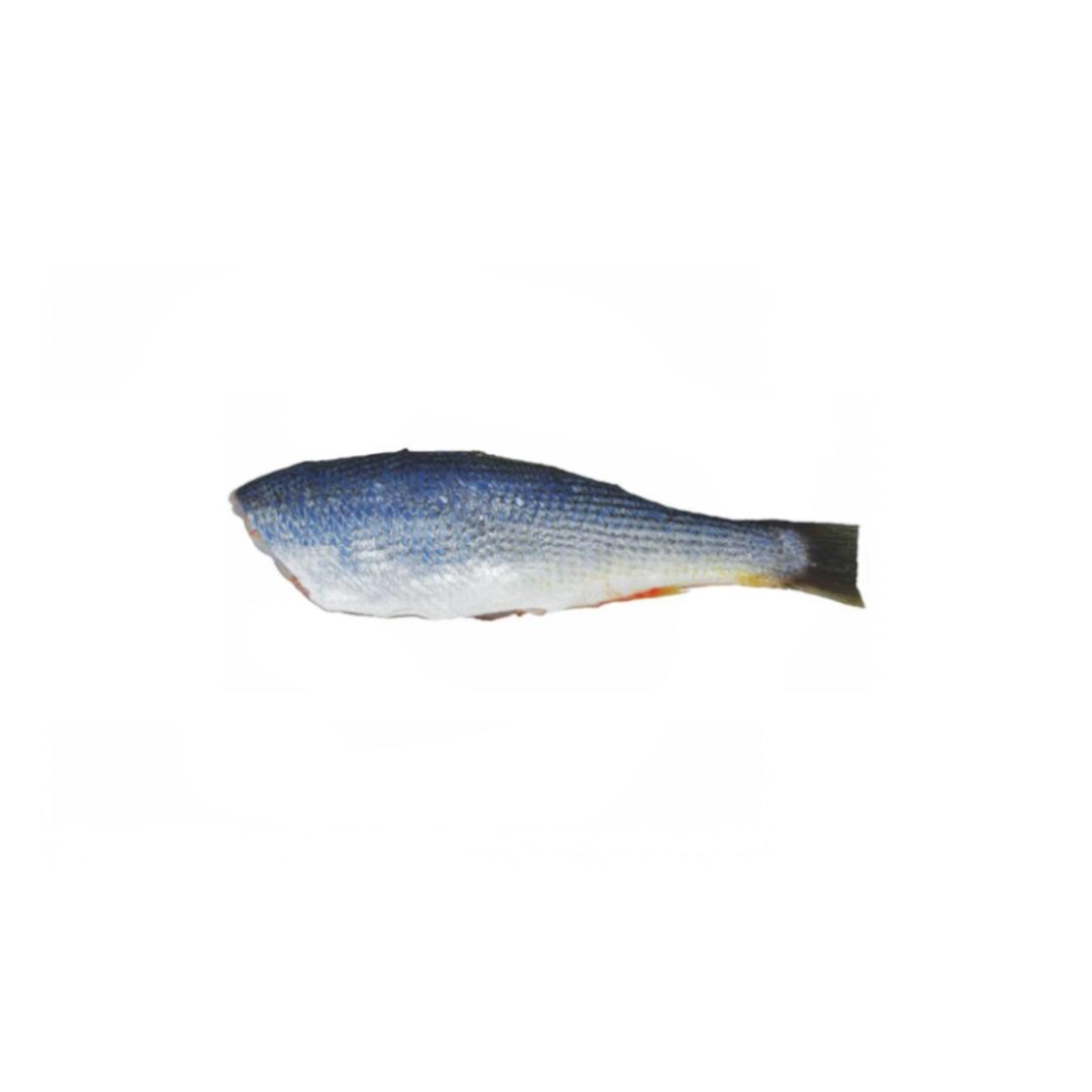 Pescada Eviscerada HG 2/3