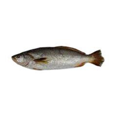 Pescada Inteira 700UP