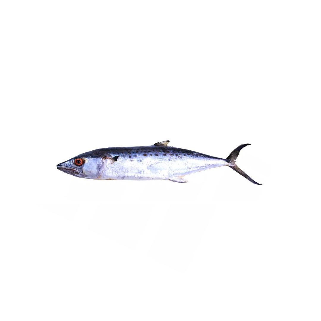 Peixe Serra C/ Cabeça S/ Víscera