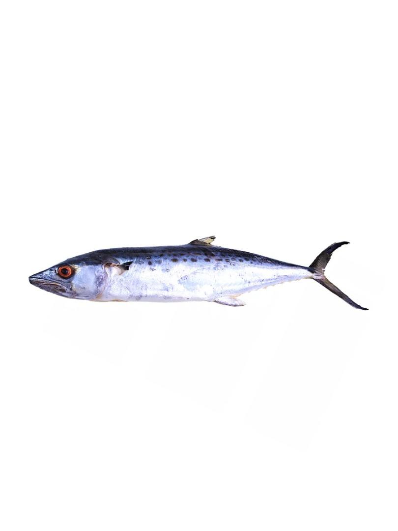Peixe Serra Eviscerada C/ Cabeça Envelopada
