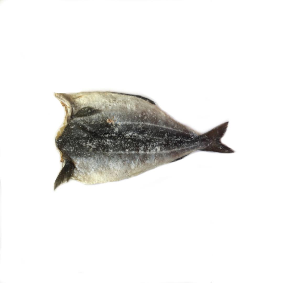 Polaca Espalmada Salgada Paraíba Pescado