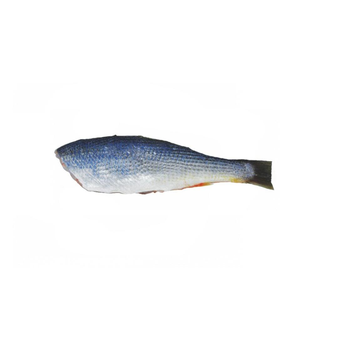 Pescada Eviscerada 7/10 PAC 1 KG