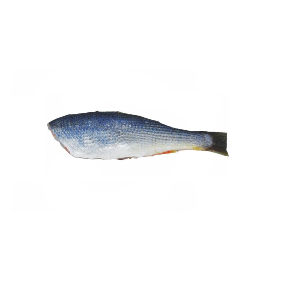 Pescada HG 3/5