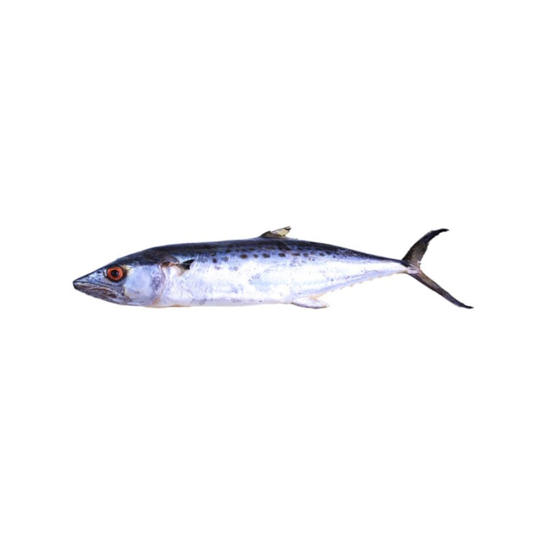Peixe Serra Eviscerada Congelada