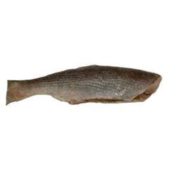 Pescada HG 2/4