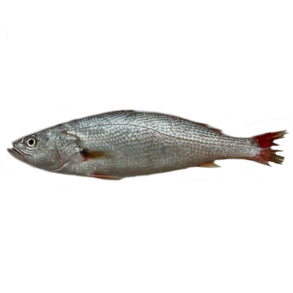 Pescada Inteira 400-600g Granel