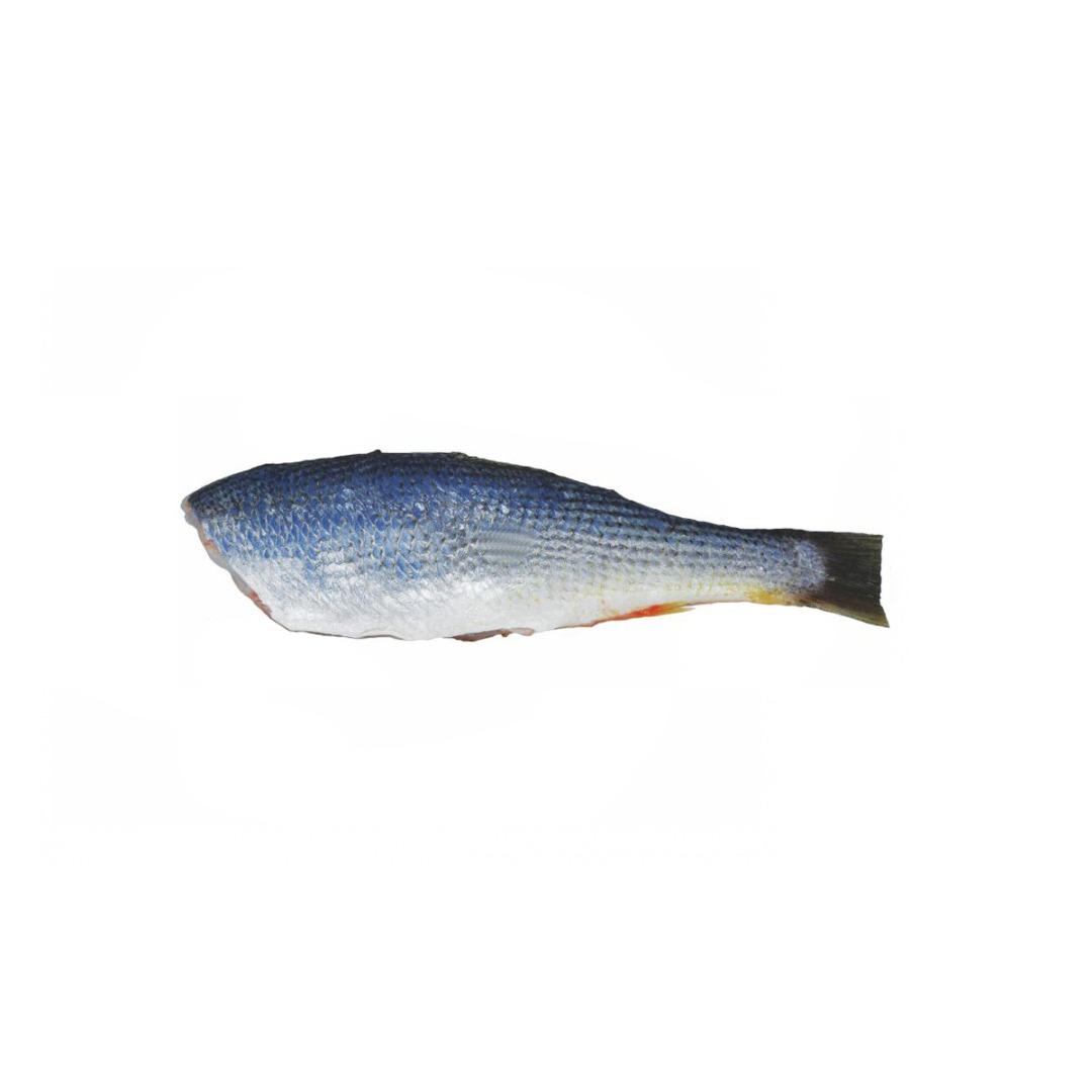 Pescada Eviscerada 6/10 PCT 1 Kg Brasil Sul
