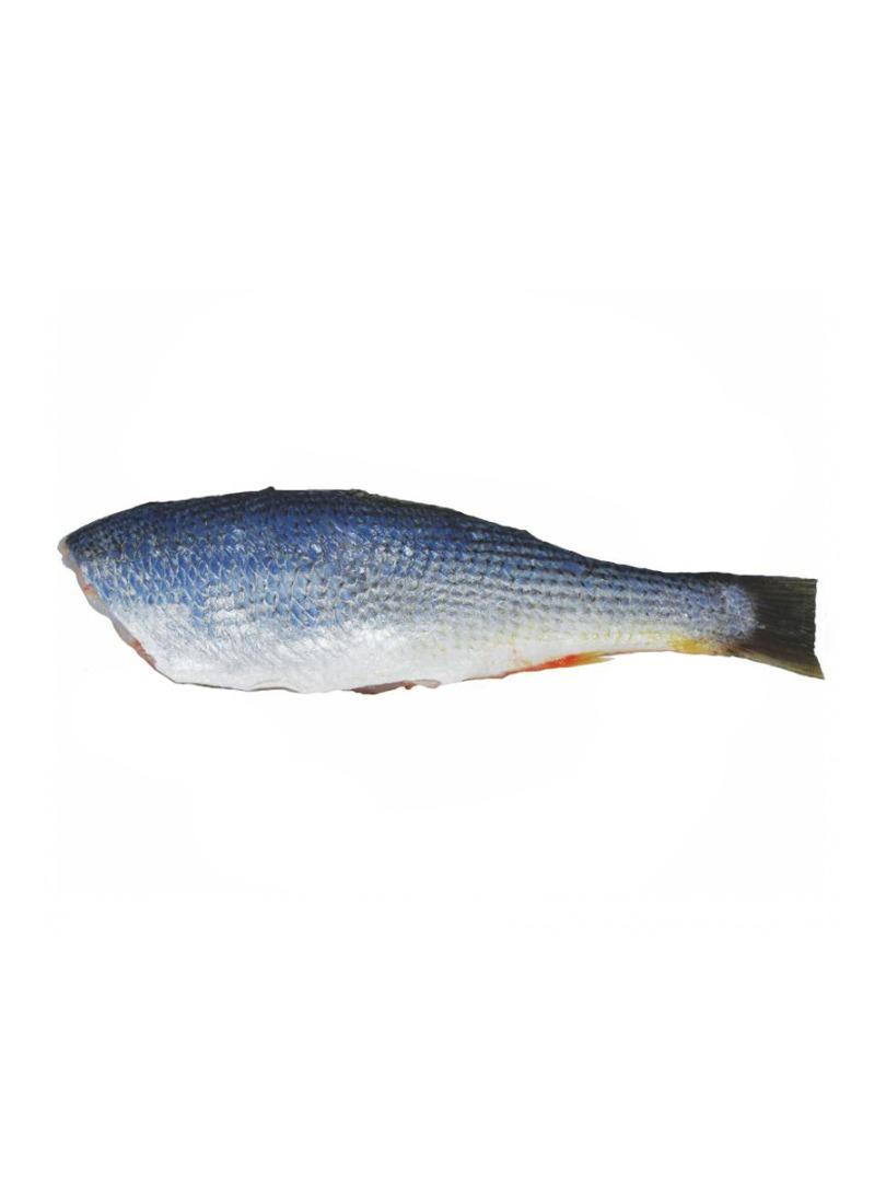 Pescada Eviscerada 6/8 PCT 1 Kg Quadro Mares