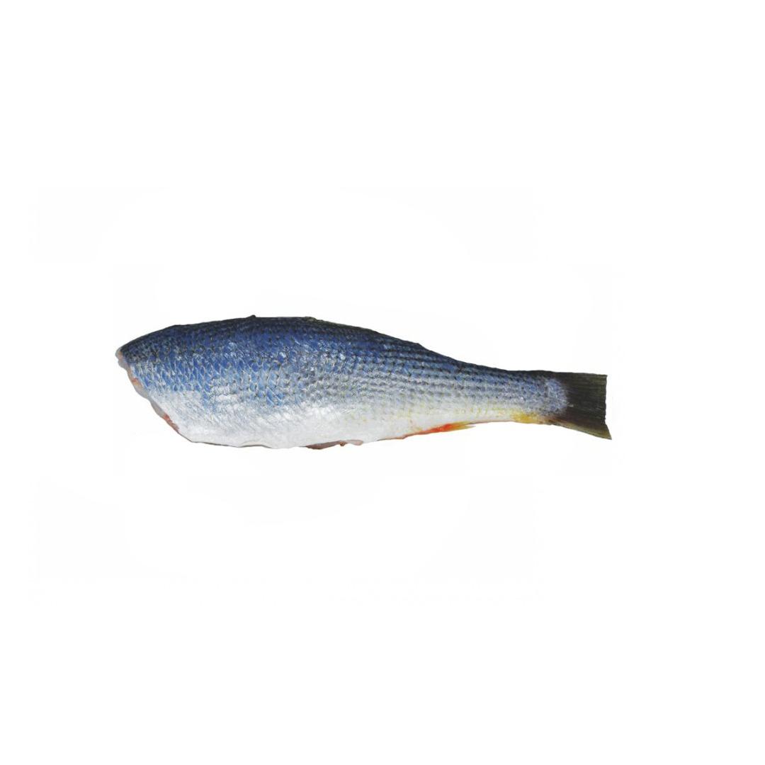 Pescada HG 4/6 PAC 1 KG
