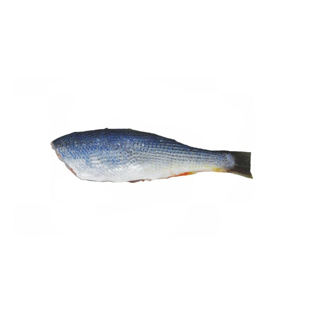 Pescada Hg 6/8